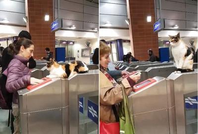 貓站長趴閘口驗票 嚴防乘客逃票