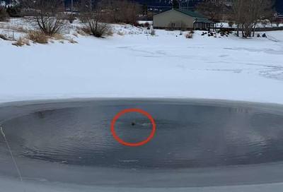 冰湖冒奇怪黑點 送貨員看清後秒脫光