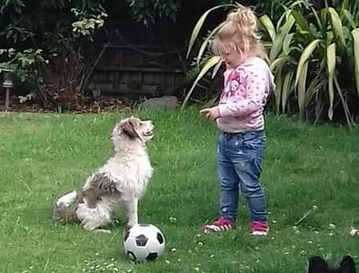 自閉童問「狗狗去哪?」家人不忍回