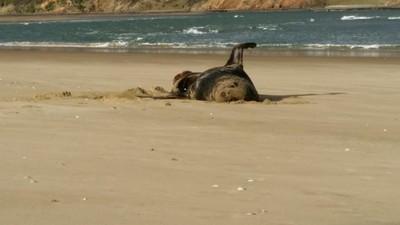 海豹便便藏隨身碟 還能打開播影片