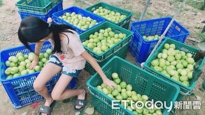 媽怨女兒「太貼心」主動到果園幫忙