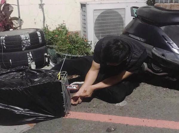 ▲天降黑貓砸車窗 車主霸回:生命比較重要,車修好就好了。(圖/陳凱力翻攝)