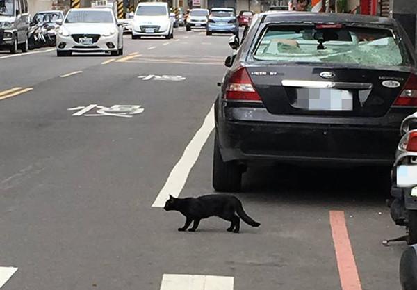 ▲天降黑貓砸車窗 車主霸回:生命比較重要,車修好就好了。(圖╱記者陳凱力翻攝)