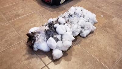 貓咪送進來已經變雪球 獸醫師鬼門關拔河兩小時 救回毛茸茸凍僵喵