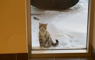 零下32度凍傷 浪貓到消防局求救