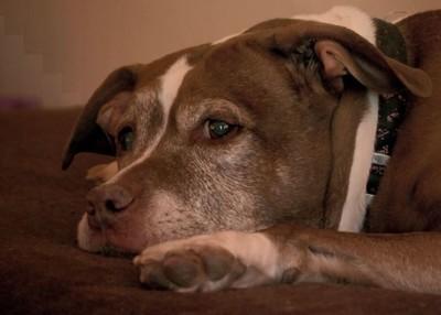 比特騷擾路人 驚險真相被挖角當警犬