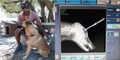 奇蹟生還!愛犬被搶匪刀插頭8公分