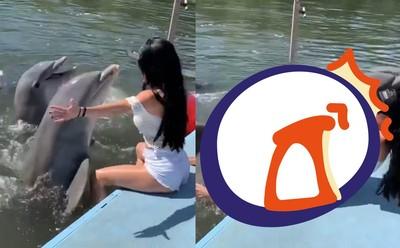 正妹遭興奮海豚「壓」 尷尬慘叫
