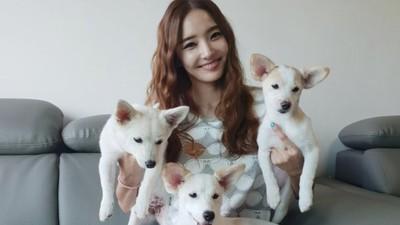 10天找不到家就安樂死!韓女星暖當「狗狗看護」 幫他們找到幸福