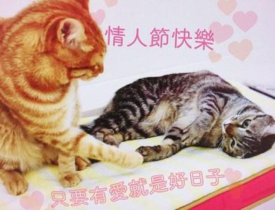 蔡英文情人節曬貓:有愛都是好日子