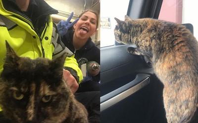 消防貓遭匿名投訴 被趕離5年家