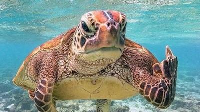 工讀生快出來!動物版「星期一症候群」海龜怒比中指心情超blue