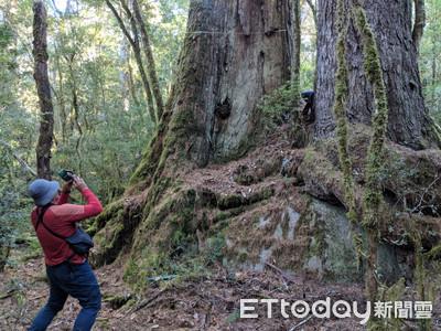 最高64米!驚見八通關古道「巨木森林」