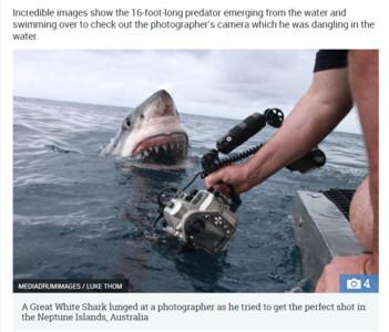 攝影師「徒手」進水照相 5m大白鯊張大口在一旁