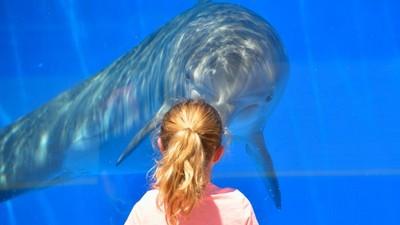 海豚眼中的人類?科學家將聲音轉成圖像..人類對牠們來說是萌物!