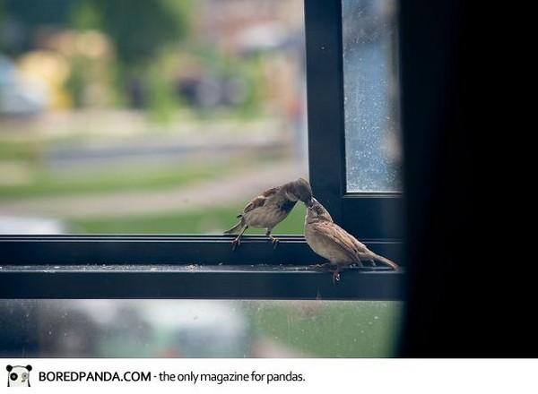 雷雨過後,一隻瞎眼的小麻雀掉在陽台
