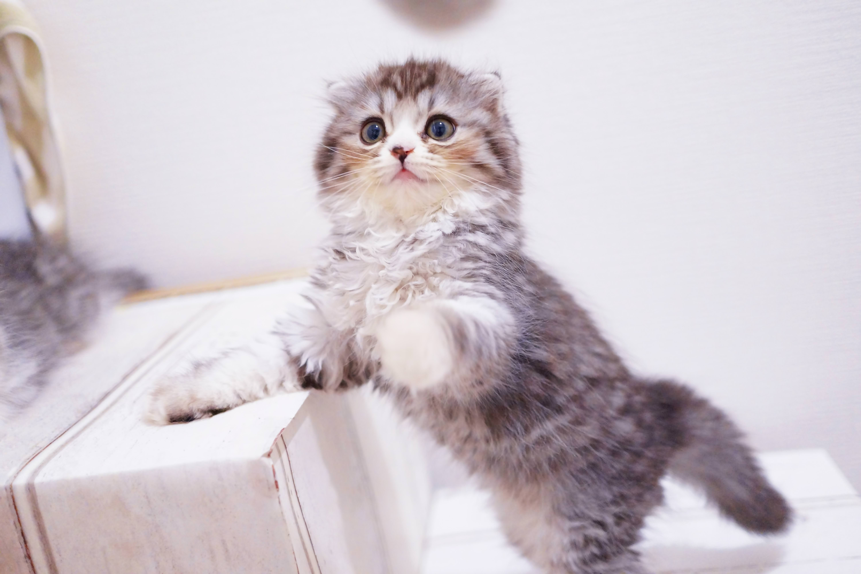 ▲貓咪,貓,逗貓。(圖/取自免費圖庫pakutaso)