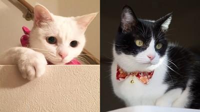 貓奴快看!主子也有自己「專屬顏色」 白貓適合糖果色、橘貓秋冬暗色