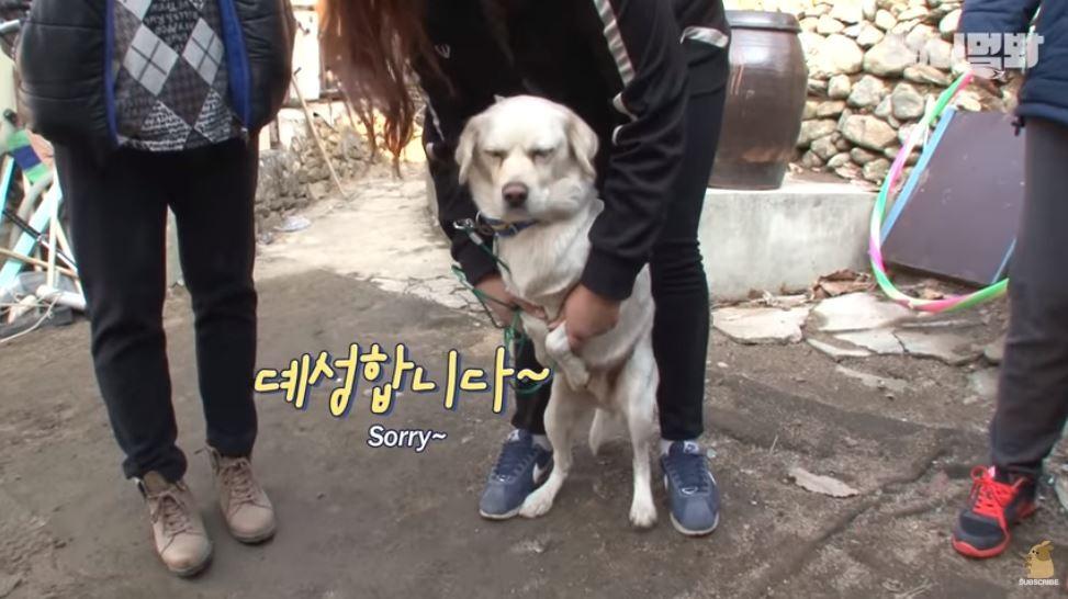 ▲▼ 花心狗。(圖/翻攝自YouTube/SBS TV동물농장x애니멀봐)