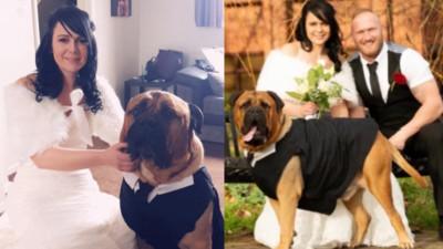 罹癌狗狗剩4個月生命!新娘排除萬難提前婚期 只為了讓愛犬參加婚禮
