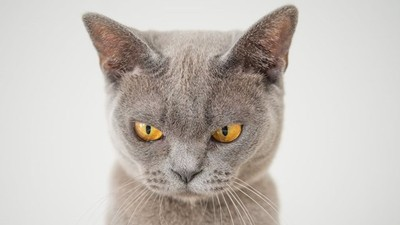 研究指出貓咪會「有樣學樣」 家裡毛小孩脾氣差 原來都是學你的