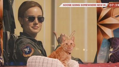 《驚奇隊長》萌貓Goose直播!52分鐘只見貓咪晃來晃去 躺床打呼嚕