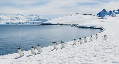 帶著愛妻遺願遊南極! 感傷老翁吹著冷冽海風:約好在這過生日