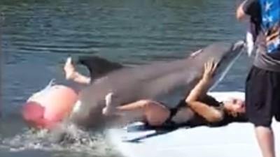 壞壞哦!海豚撲倒巨乳女遊客「高頻率抖動」一旁老公笑翻全拍下