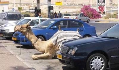 杜拜的生活…跟我們很不一樣