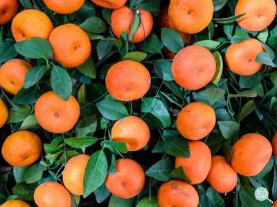 網瘋傳柑橘泡藥放半年不壞?專家揭真相!