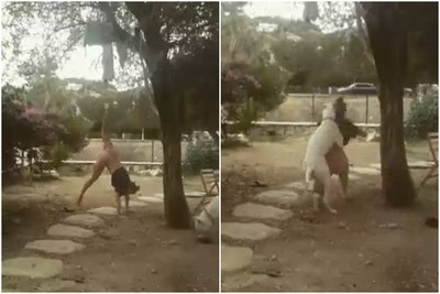 瑜珈女倒立失敗 狗狗看到超興奮