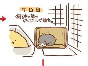 大檸檬用圖(圖/翻攝自推特@takeya23)