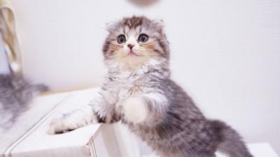 專家發現「貓奴其實很厲害」!能叫得動貓的人 連你老闆都能說服