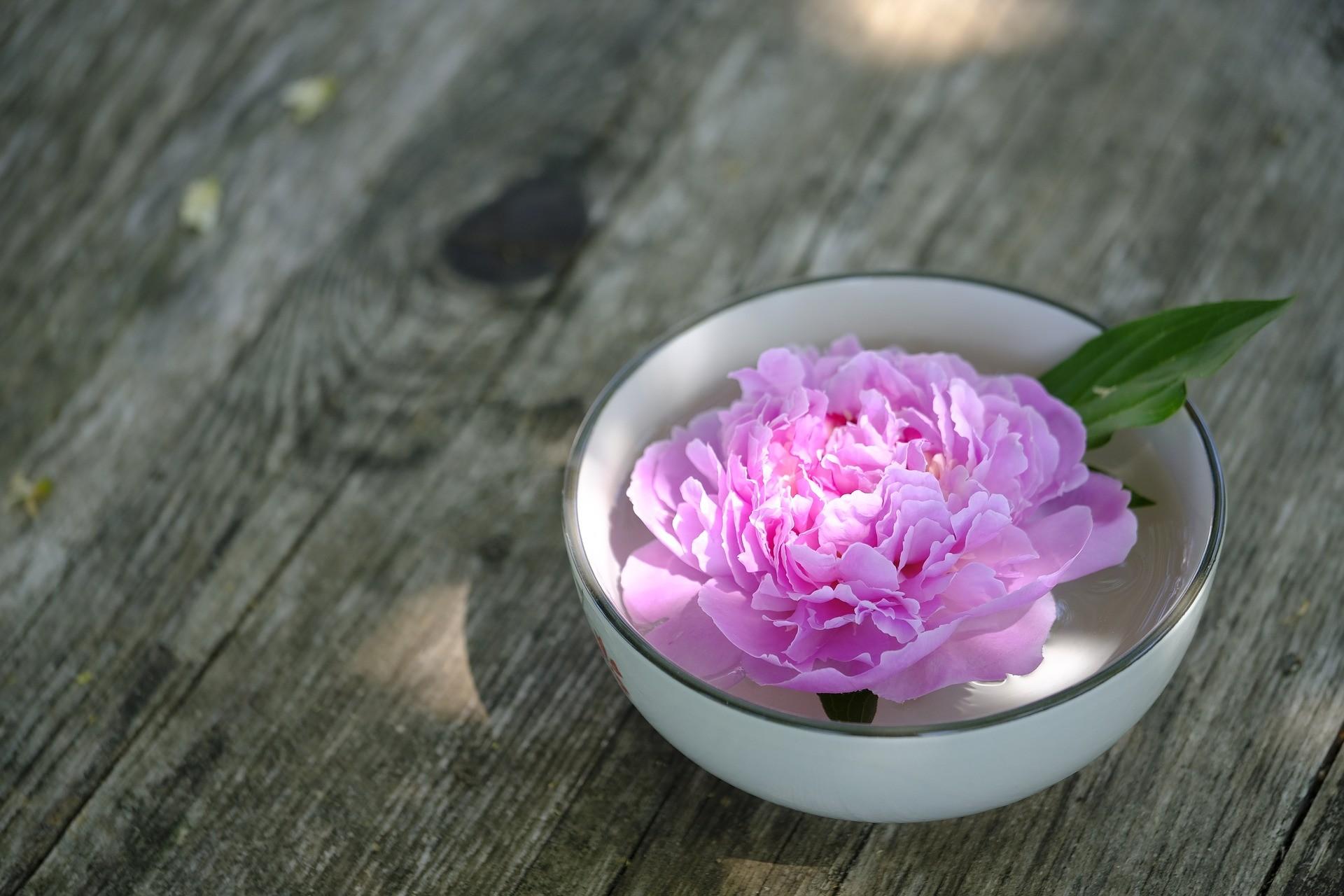 ▲牡丹。(圖/取自免費圖庫pixabay)