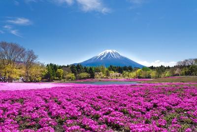 富士山伴您賞繽紛花海一次滿足