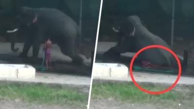 大象洗澡聽錯指令 馴象師鞭打沒站穩...竟被大象活活壓死!