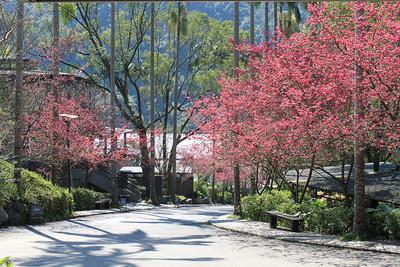 春遊好趣處 大板根森林溫泉酒店