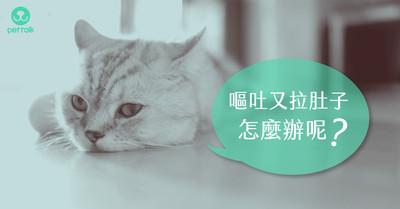 嘔吐又腹瀉!引發貓咪腸胃炎的5大原因