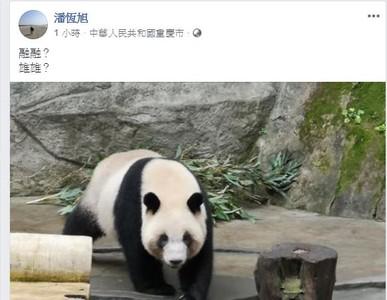熊貓融融、雄雄要來了 潘恆旭證實