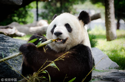 「大熊貓國家公園」加碼文創園區