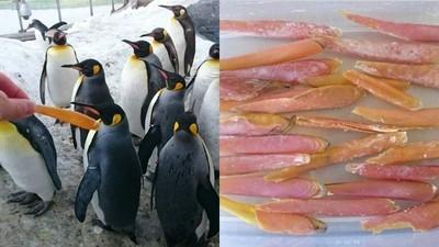 獵奇冷知識:企鵝除了換毛還會換鳥嘴? 橘色下嘴板年年換新的