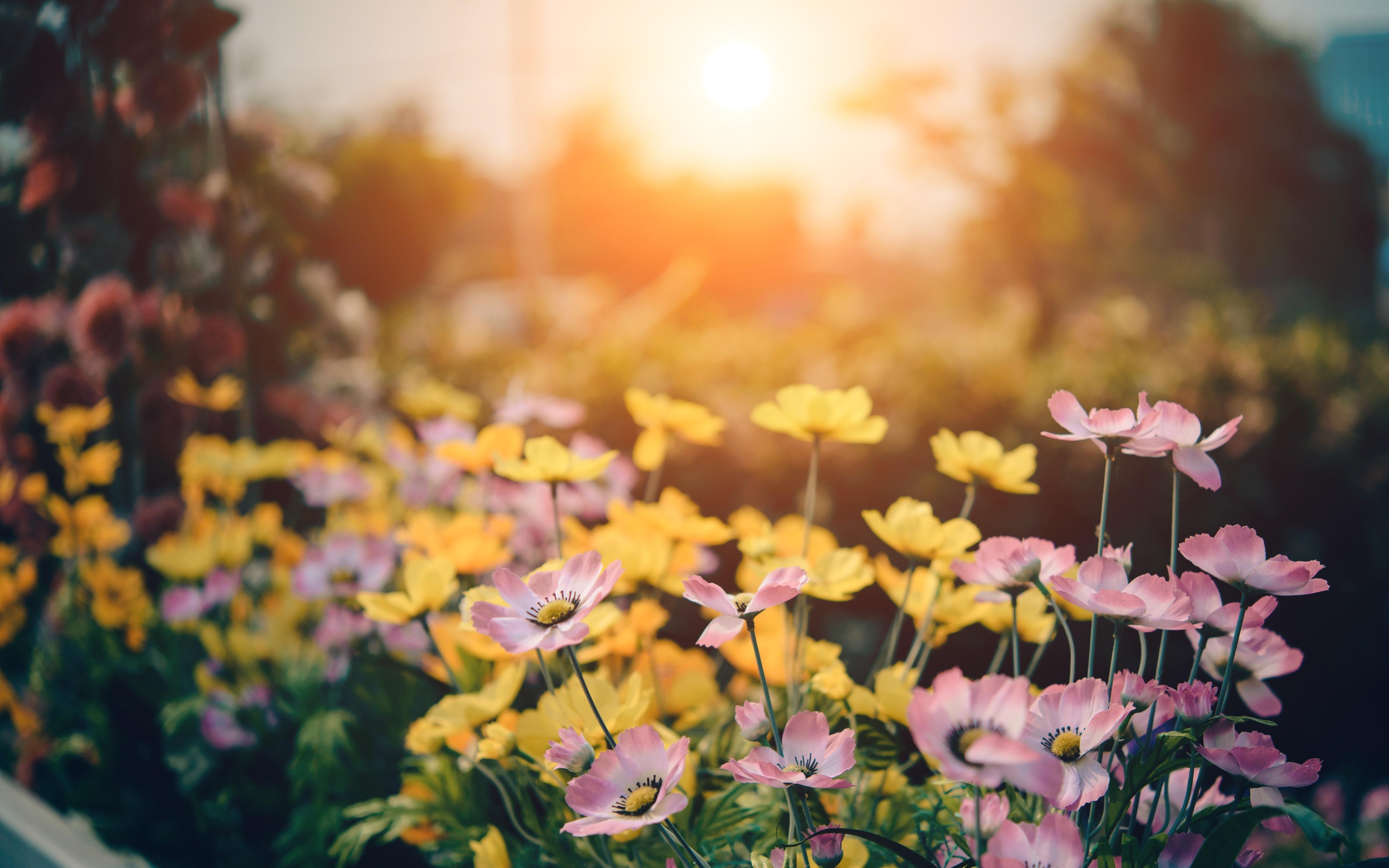 ▲花,花園,鮮花。(圖/取自免費圖庫Pexels)
