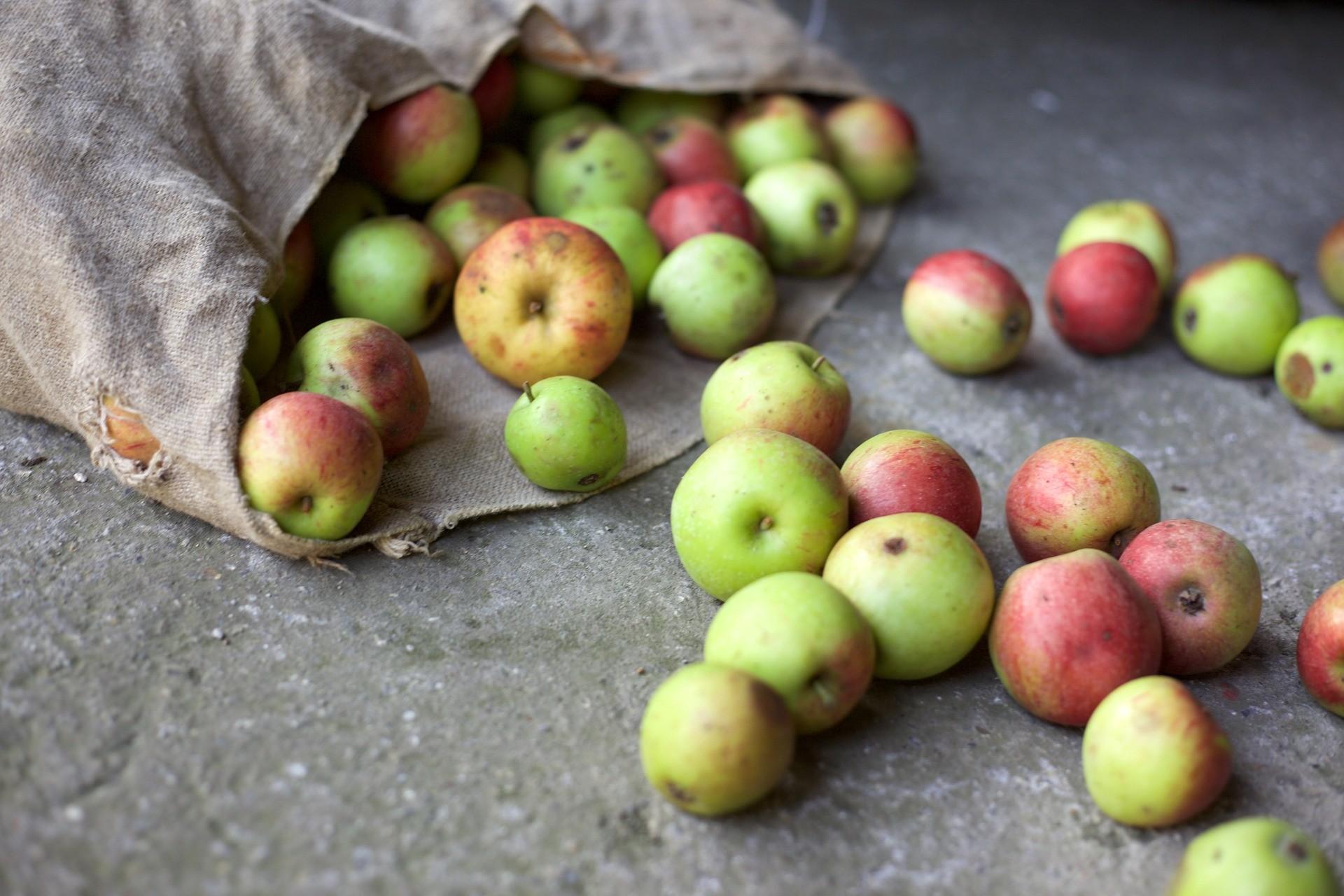▲剩食,爛水果,食物浪費。(圖/取自免費圖庫Pixabay)