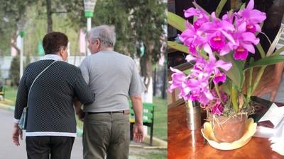 花葬送「愛花老妻」最後一程 她走後夫種出整片花園:我下輩子也愛妳