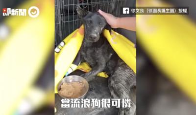 黑狗遭撞跌水溝 後肢癱瘓狂悲鳴