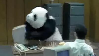 誰說熊貓沒有攻擊性?這隻兇到會讓你七天不能上班