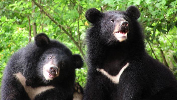 「台灣黑熊」的圖片搜尋結果
