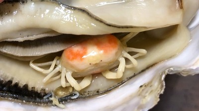 打開熟牡蠣「八隻腳躺裡面」!被當蜘蛛其實是蟹,買一送一就吃了吧