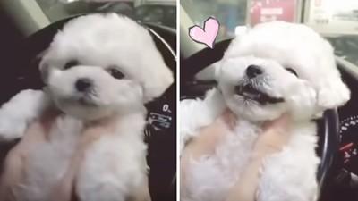 主人偷親「牠對著鏡頭笑了」!萌犬真誠表情,感動上萬網友