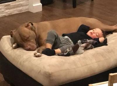 小男孩生病不讓碰 愛汪一鑽他秒投降
